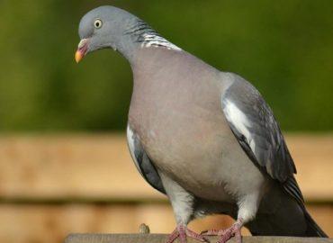 google-pigeon-update-seobuckinghamshire